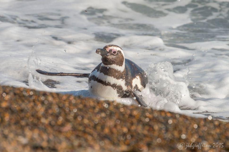 Emerging from an ocean swim